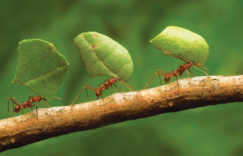 Ant-architects