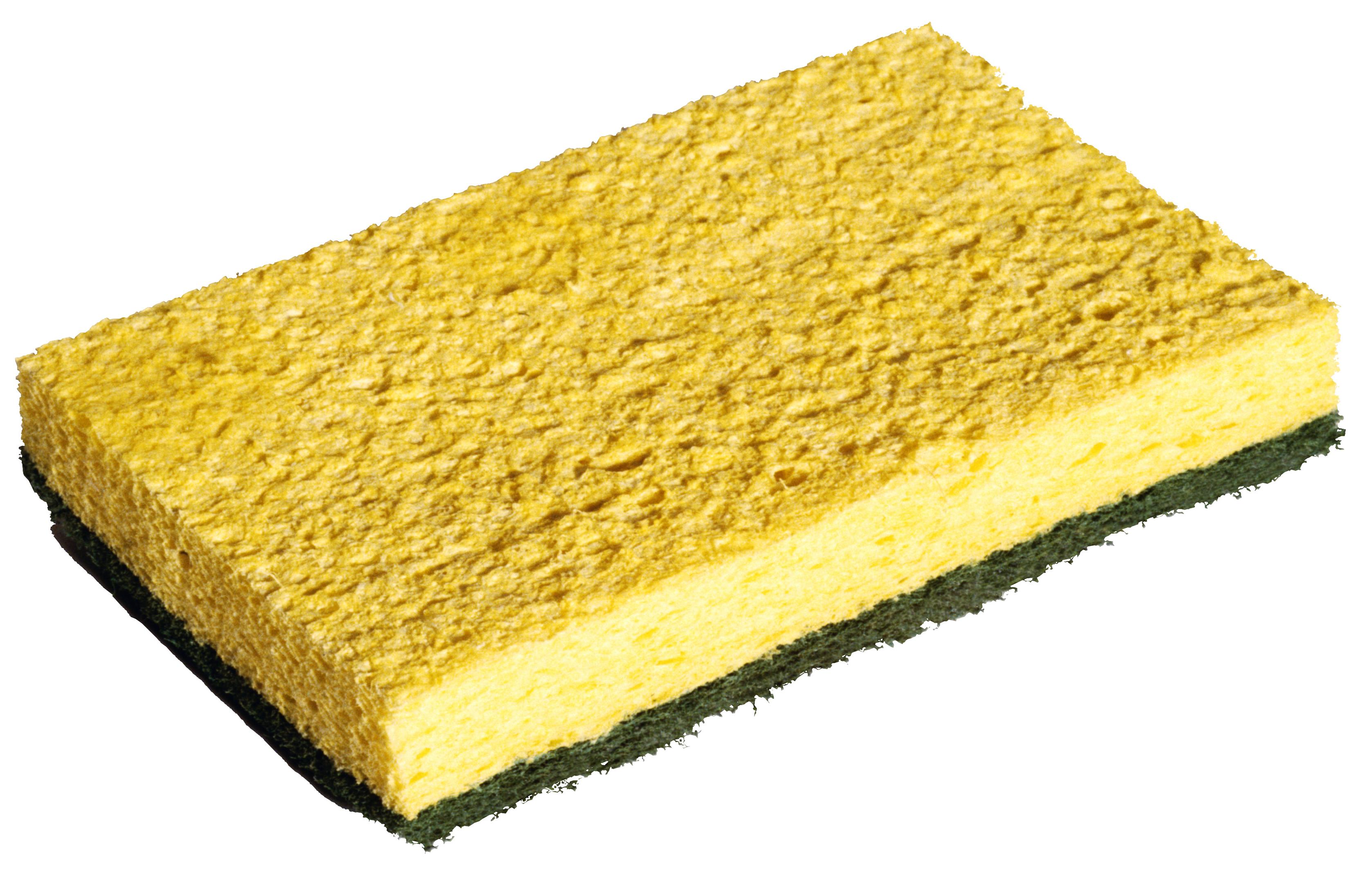 sponge_PNG16